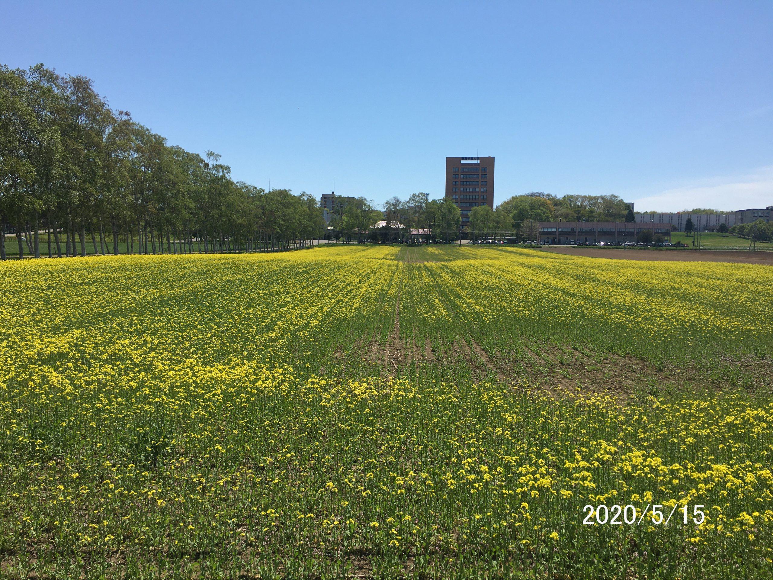 白樺並木沿いの圃場。今年は何が。
